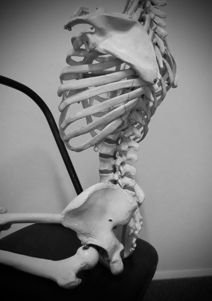 The sitting skeleton - note anterior pelvic rotation