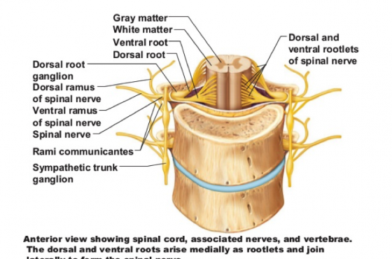 Revisiting 'a neutral spine' – and why does it matter?